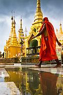 A Buddhist monk at Shwedegon Pagoda in Yangon, Myanmar (Burma).