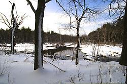 Hop Brook In Winter
