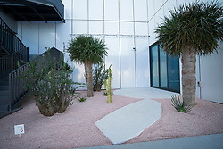 View of outdoor Socotran Garden at new Jameel Arts Centre in Dubai, UAE, United Arab Emirates