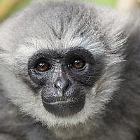 Javan Primate Center