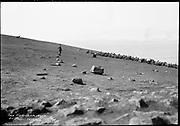 "9707-K208. written on original negative: ""The holluschickie on St. Pauls Island. CLA""  St. Pauls Island. Pribilof Group. July 11, 1919"