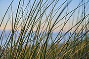 Westduinpark, Den Haag, Nederland - 21 juni 2021: Helmgras in de duinen tijdens de zonsondergang.  Westduinpark, The Hague, Netherlands - June 21, 2021: Marram grass in the dunes during the sunset