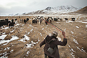 Abdul Qayoom , brother of Haji Bootoo Boi, going to gather the family yaks. He uses a slingshot to round up the animals..The Kyrgyz settlement of Tchelab, near Chaqmaqtin lake, Haji Bootoo Boi's camp...Trekking through the high altitude plateau of the Little Pamir mountains, where the Afghan Kyrgyz community live all year, on the borders of China, Tajikistan and Pakistan.