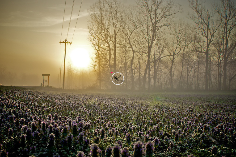 Morning Glory Mist