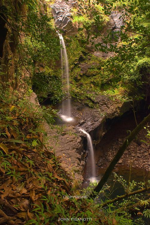 Found along the Pipiwaii Trail, Haleakala National Park, Maui, Hawaii