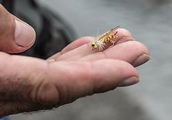 THEMENBILD - ein Mann hält eine Trockenfliege (Köder) in den Händen, aufgenommen am 09. Juni 2019, Kaprun, Österreich // a man holds a dry fly (bait) in his hands on 2019/06/09, Kaprun, Austria. EXPA Pictures © 2019, PhotoCredit: EXPA/ Stefanie Oberhauser