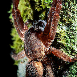 Aranha / Spider / Spinne