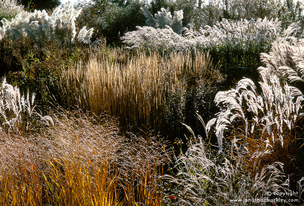Backlit grasses at Lady Farm in autumn