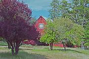 Heart K Barn, Spring, Genesee Valley, Heart K Ranch, Fruit Trees, Plums, Apples, Tall Grass, Fresh Grass, Forest, Pines, Sierra Nevada Mountains, California