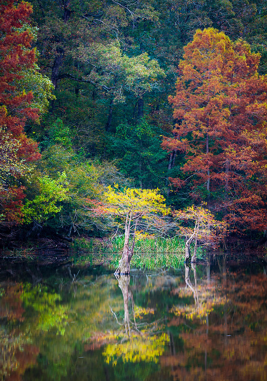 "Beavers Bend State Park is a 1,300 acres Oklahoma state park located in McCurtain County. It is approximately 10.5 miles north of Broken Bow. It was established in 1937 and contains Broken Bow Lake. Built on the site of an old Choctaw settlement, Beavers Bend State Park was named after John T. Beavers, a Choctaw intermarried citizen. The ""bend"" in the park's name refers to an area of the park where a portion of Mountain Fork River meanders sharply, making an almost 180-degree turn. This area is commonly known as the River Bend, and is a popular area for trout fishing, canoe rentals, and swimming. Also in the River Bend area is the Broken Bow Hydroelectric Plant, which generates energy from the waters of Broken Bow Lake.<br /> The local rock formations are some of the most distinctive in the state of Oklahoma. Just north of Broken Bow, sedimentary rock has been thrust upward due to an ancient collision of the North American and South American Plates, forming what is now the Ouachita Mountains. Evidence of what is called the Ouachita orogeny can be seen all over the park, where some layers of rock can be seen tilted up at angles of about sixty-degrees. These geologic features can be easily viewed around Broken Bow Lake and Mountain Fork River, where erosion has left much of the rock exposed."
