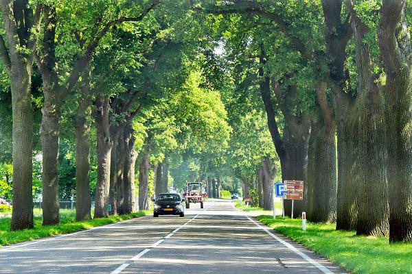 Nederland, Arcen, 15-5-2018 Proviciale weg N271 met mooie grote bomen langs de klant. Voor de verkeersveiligheid wil men de karakteristieke bomenrij langs dit soort wegen weghalen. Foto: Flip Franssen