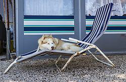 THEMENBILD - ein Husky auf einer Sonnenliege im Schatten, aufgenommen am 26. Juni 2018 in Porec, Kroatien // a husky on a sunbed in the shade, Porec, Croatia on 2018/06/26. EXPA Pictures © 2018, PhotoCredit: EXPA/ JFK