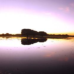 """""""Anoitecer no Pantanal (Paisagem) fotografado em Corumbá, Mato Grosso do Sul. Bioma Pantanal. Registro feito em 2017.<br /> <br /> <br /> <br /> ENGLISH: Dusk in thein the Pantanal photographed in Corumbá, Mato Grosso do Sul. Pantanal Biome. Picture made in 2017."""""""