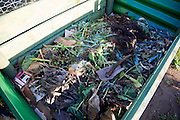 Organic vegetable matter decomposing in compost bin