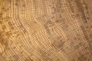Pedunculate Oak - Quercus robur - Growth Rings