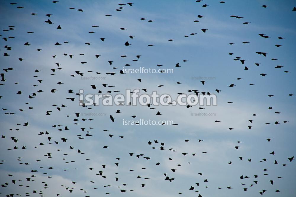 La laguna de Zumpango, a pesar de la contaminación por aguas negras y basura arrojada por las personas, alberga una gran variedad de aves.