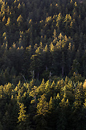 Sunset light hitting the tops of the evergreen trees on the side of Mount Maxwell below Baynes Peak. Photographed in Burgoyne Bay Provincial Park on Salt Spring Island, British Columbia, Canada.