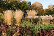 Miscanthus and Sedum in autumn in The Saville Garden;  Surrey, UK<br /> October