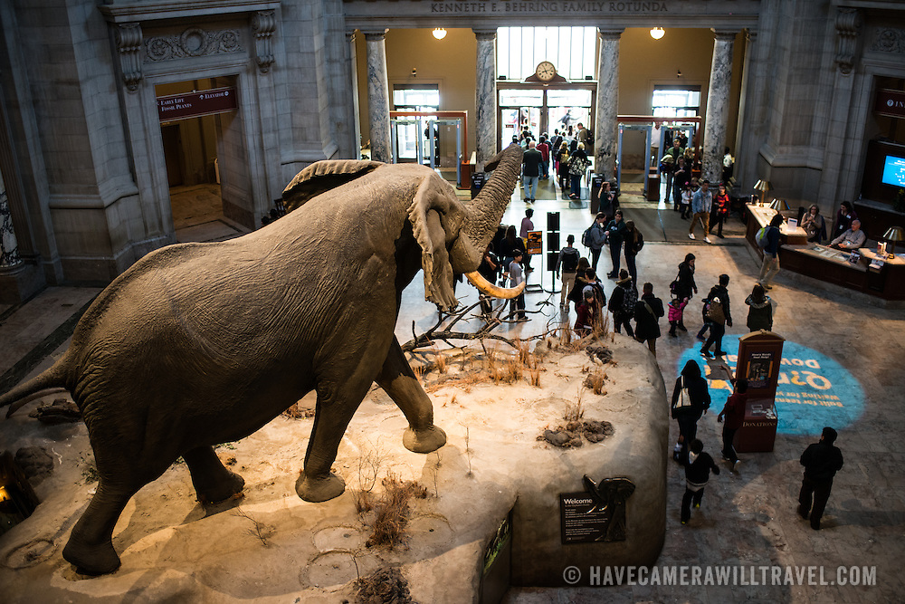 A life-size elephant dominates the main rotunda at the Smithsonian National Museum of Natural History on the National Mall in Washington DC.