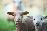 Farm & Livestock Photos