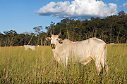 Cattle ranching in Mato Grosso do Sul in Brazil has resulted in massive deforestation in the state.