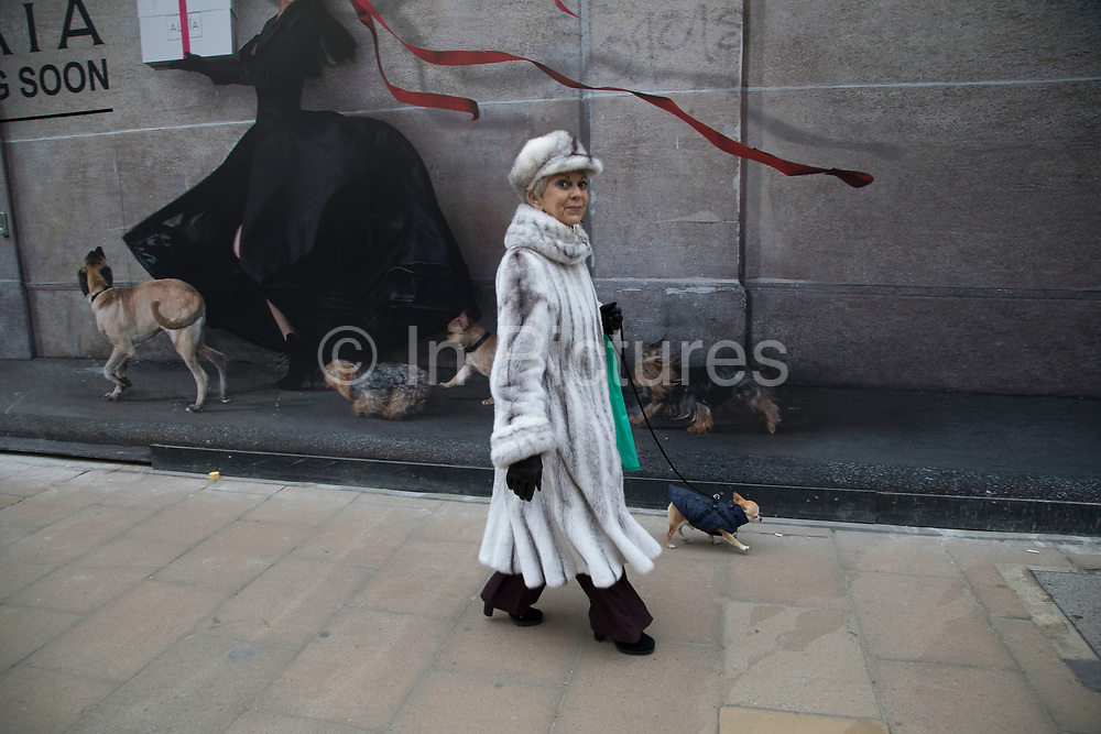 Woman wearing a fur coat walks her chihuahua past an advertising hoarding depicting dogs in an amusing juxtaposition along Bond Street in London, England, United Kingdom.