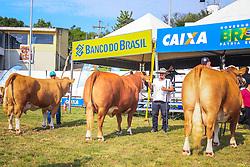 Grande Campea Gado de Corte da raça Simental Fleckvieh durante a 38ª Expointer, que ocorrerá entre 29 de agosto e 06 de setembro de 2015 no Parque de Exposições Assis Brasil, em Esteio. FOTO: Vilmar da Rosa/ Agência Preview