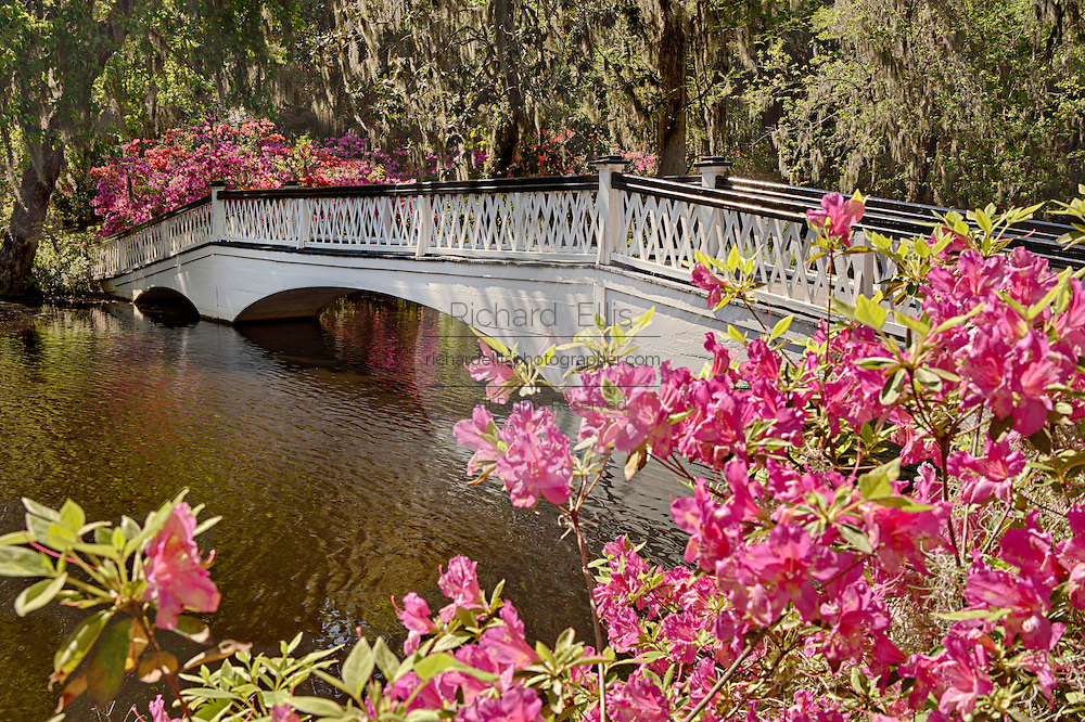 Long White Bridge over the Big Cypress Lake surrounded with blooming azaleas at Magnolia Plantation April 10, 2014 in Charleston, SC.