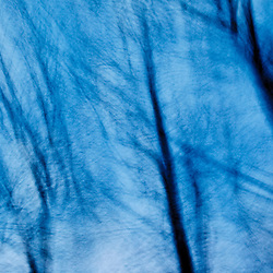Tree abstract, Portsmouth, New Hampshire.