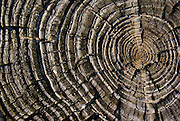 Tree rings, Delaware Bay dock, Cape May, New Jersey
