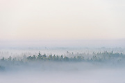 The tree tops poking out of thick fog laying over narrow forest hills and hidden bogs, Tīreļpurvs, Latvia Ⓒ Davis Ulands | davisulands.com
