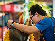 20 SEPTEMBER 2015 - SARIKA, NAKHON NAYOK, THAILAND: A man whispers a prayer to the mouse who is Ganesha's assistant at the Ganesh festival at Shri Utthayan Ganesha Temple in Sarika, Nakhon Nayok. Ganesh Chaturthi, also known as Vinayaka Chaturthi, is a Hindu festival dedicated to Lord Ganesh. Ganesh is the patron of arts and sciences, the deity of intellect and wisdom -- identified by his elephant head. The holiday is celebrated for 10 days. Wat Utthaya Ganesh in Nakhon Nayok province, is a Buddhist temple that venerates Ganesh, who is popular with Thai Buddhists. The temple draws both Buddhists and Hindus and celebrates the Ganesh holiday a week ahead of most other places.    PHOTO BY JACK KURTZ