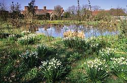 View of Great Dixter across the horse pond. Leucojum aestivum naturalised amongst Cornus alba