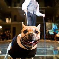 Modell led by its owner presents a collection of pet fashion during the Luxury Brands Exhibition.