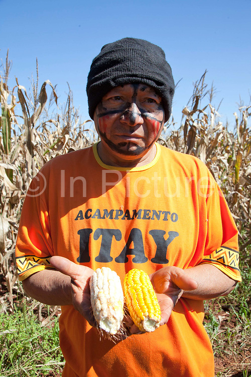 Guarani man showing the comparison of their own corn grown organically and the GM large monoculture corn from the neightbouring farms whom there are and disputes with. The Guarani are one of the most populous indigenous populations in Brazil, but with the least amount of land. They mostly live in the State of Mato Grosso do Sul and Mato Grosso. Their tradtional way of life and ancestral land is increasingly at risk from large scale agribusiness and agriculture. There have been recorded cases and allegations of violence between owners of large farms and the Guarani communities in this region.