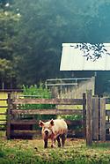 Peacefield Farm