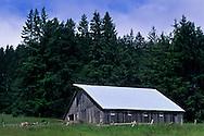Barn on Fickle Hill, above Eureka / Arcata, Humboldt County, CALIFORNIA