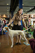 While Zephyr's handler looks to the ring at her competition, the pointer looks to the crowd for someone to give her attention.