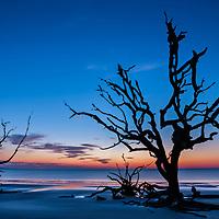Driftwood Beach 01 - Jekyll Island, GA