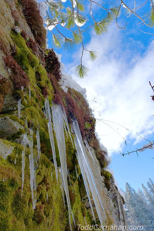 ice cliff moss c lake