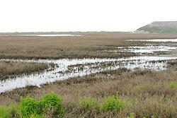 Marsh Next To Orond Beach