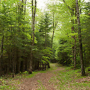 An old forest road in the Waterville Valley area of The White Mountain National Forest