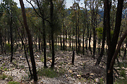 Views from Finchley Lookout , Yengo National Park, Lower Hunter region, New South Wales. It forms part of the Greater Blue Mountains World Heritage area. Bush fire damage from earlier this year.