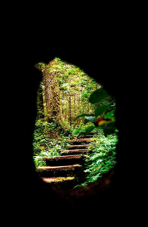 Through the Rainforest to Cape Alava, Olympic National Park, US