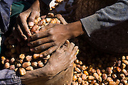 Two men pack dried dates into a sac at the open-air market in Tagounite, southern Morocco.