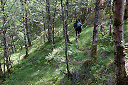 Path thru woods to vacation house on a fjord near Alversund, Norway, 35 minutes by car from Bergen.