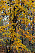 63876-02720 Fall color at Stephen A. Forbes State Park Marion Co. IL