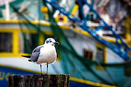 Seagull is perched on a pylon along the Mississippi Gulf Coast