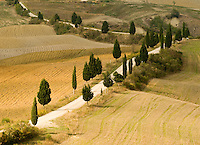 The road leading to Montichello, Italy, zig zags through groves of cyprus.