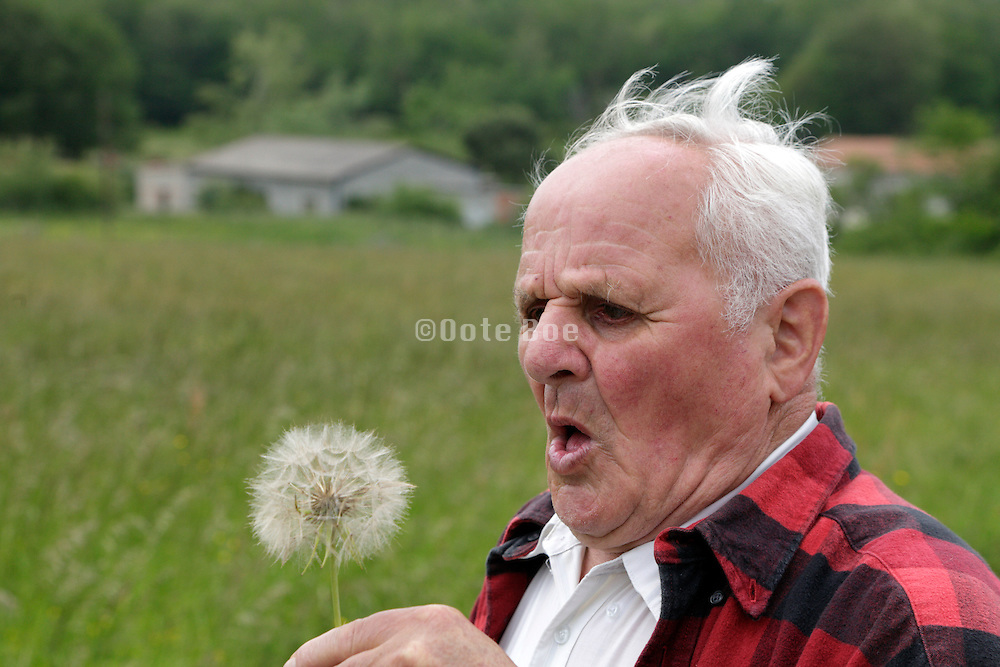 senior man preparing to blow of the seeds of a dandelion